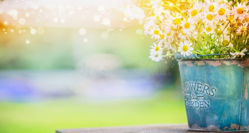 Emmer met wilde madeliefjes over de zomer of de lente mooie tuin stock afbeeldingen