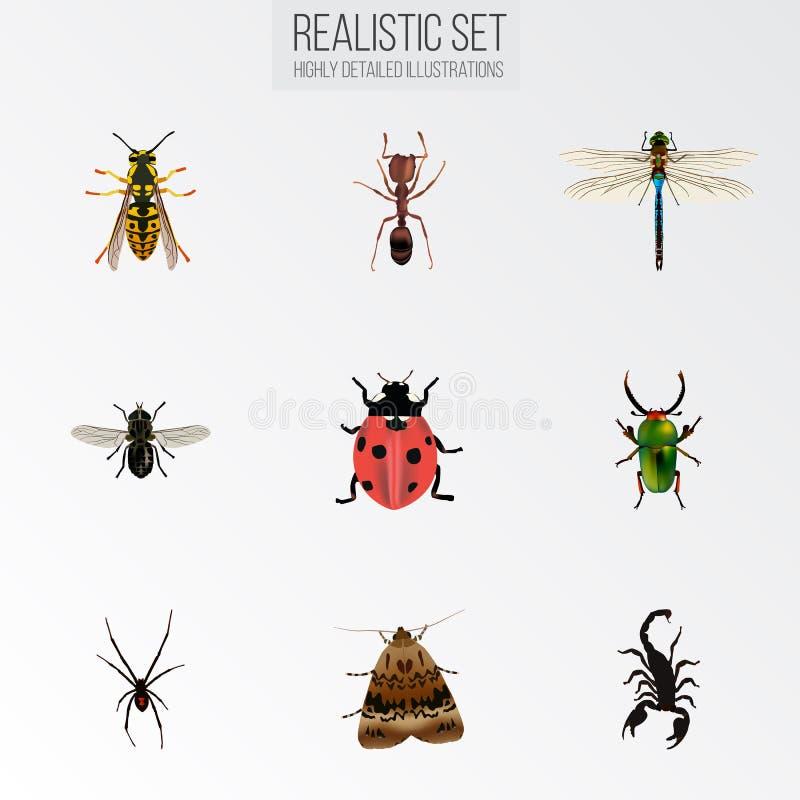 Emmet realista, jején, hilandero y otros elementos del vector El sistema de símbolos realistas del insecto también incluye la hor ilustración del vector