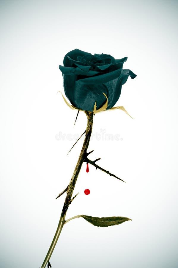 emo подняло стоковое изображение rf