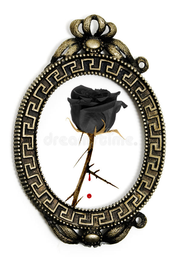 Emo rose stock photography