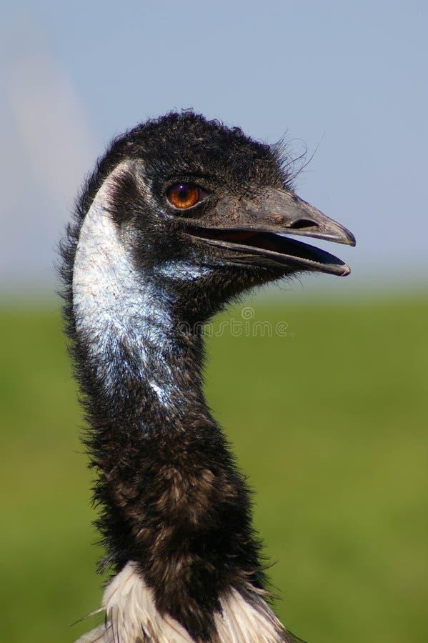 Emoe stock foto