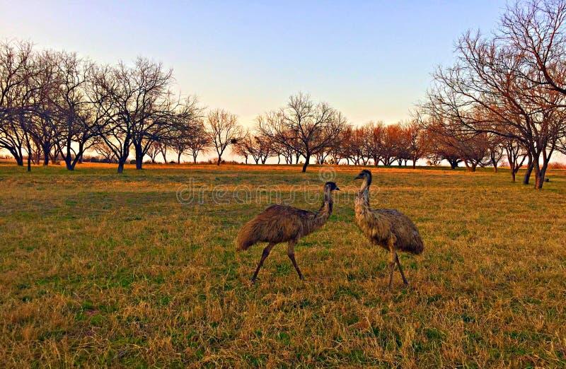 Emoes die op gebied zich verenigen stock fotografie