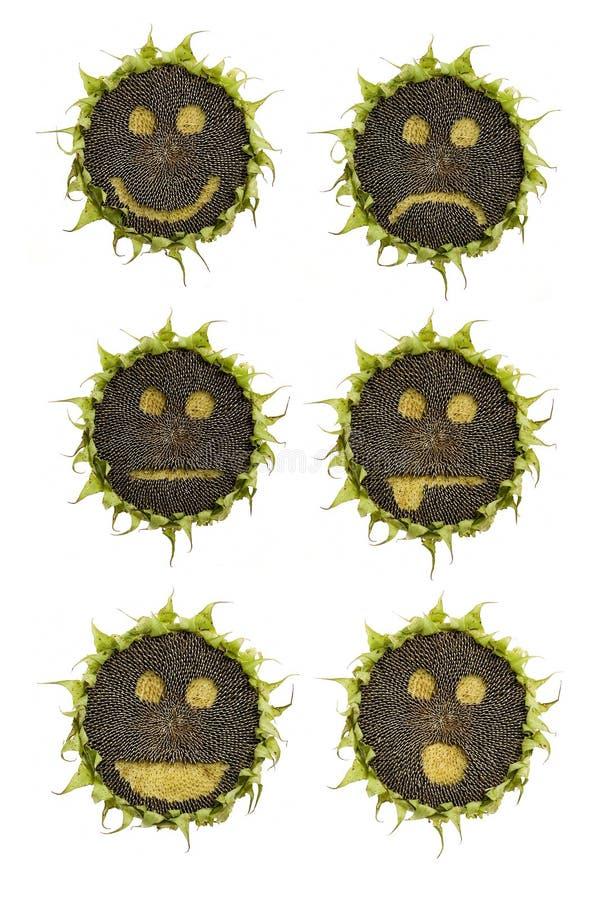 emoticons słonecznikowi obraz royalty free
