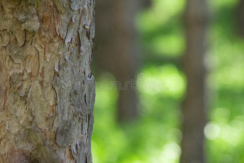 Emotional forest with blurred background green grass with empty natural space in a dreamy warm landscape. royalty free stock image