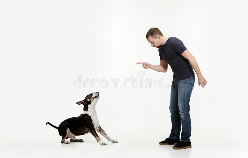 Emotionell stående av en man och hans Bull terrier hund, begrepp av kamratskap och omsorg av mannen och djuret arkivbild
