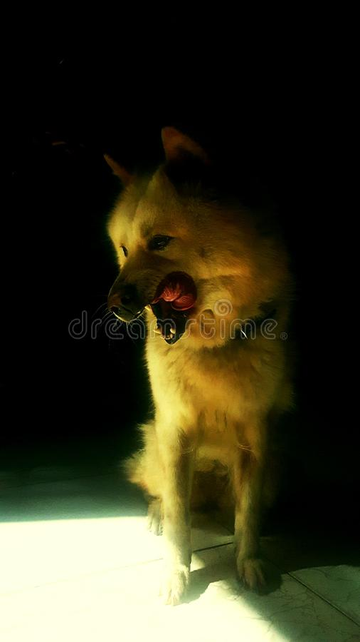 Emotions dog. In dark royalty free stock photos