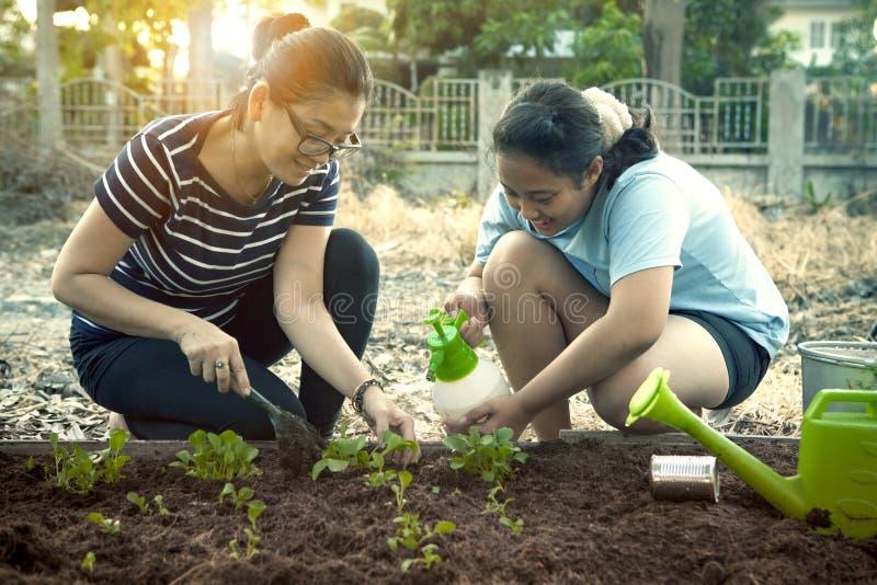 Emozione di felicità della figlia e della madre che pianta verdura organica immagine stock