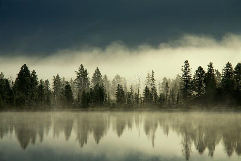 Empáñese sobre el bosque por la orilla del lago imagen de archivo libre de regalías