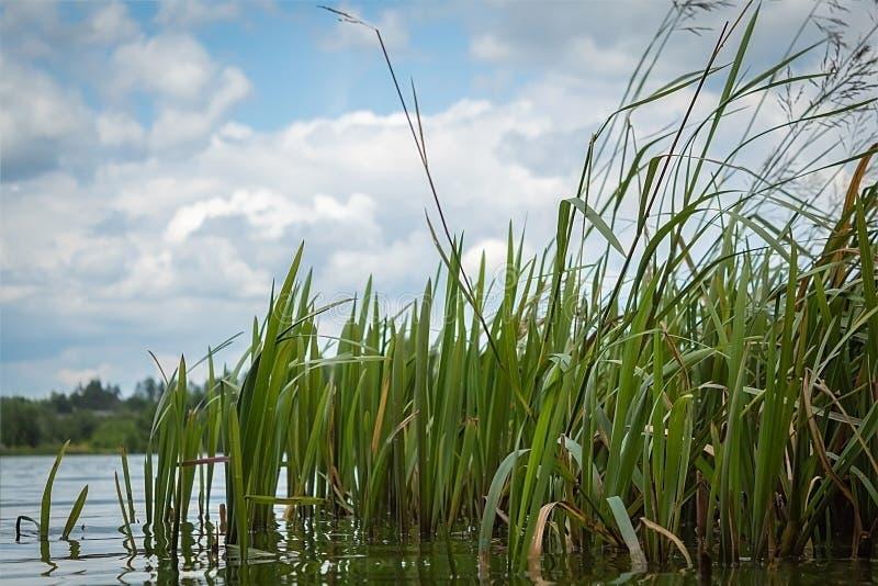 Empaña en las orillas del lago foto de archivo