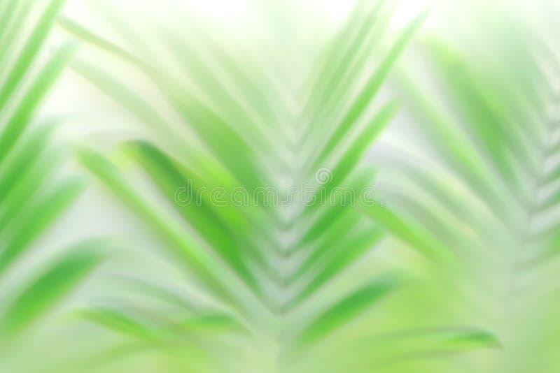 Empañe el efecto verde del bokeh de las hojas de palma - fondo tropical hermoso del follaje foto de archivo