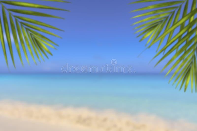 Empañe la hoja de palma hermosa del verde de la naturaleza en la playa tropical con el fondo del extracto de la onda ligera del s fotos de archivo