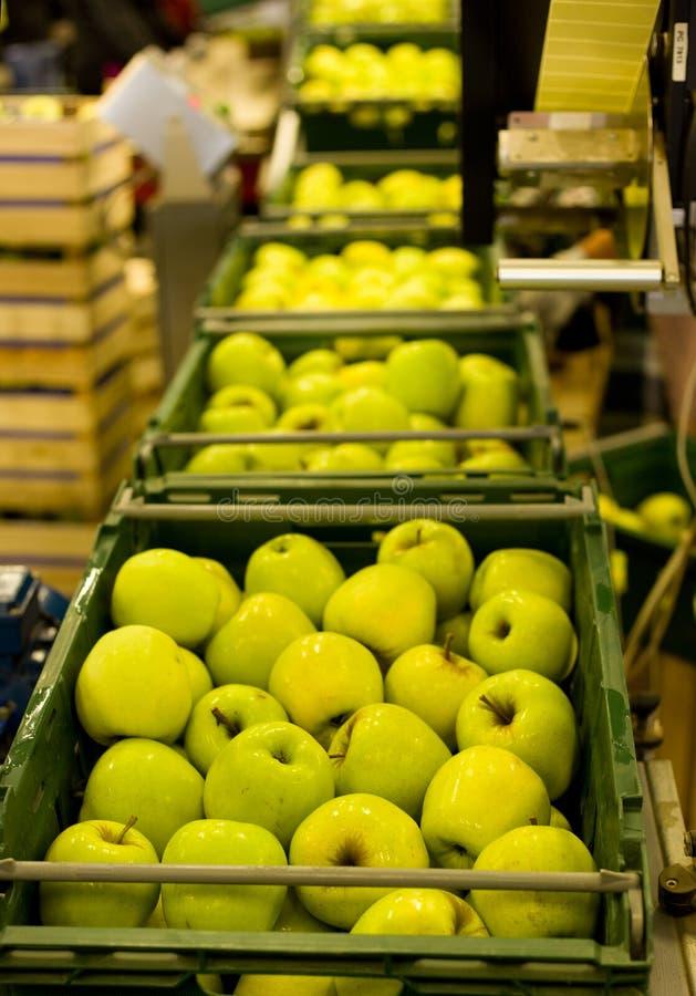 Empacotamento de Apple fotos de stock