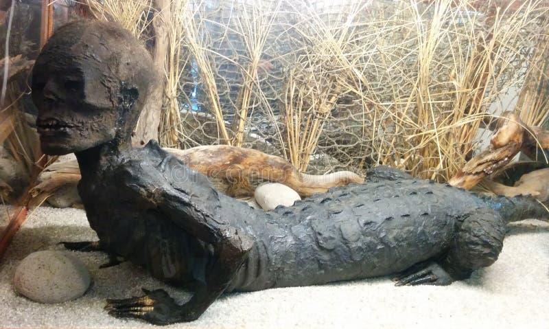 empaillage bizarre d'Alligator-homme sur l'affichage images stock