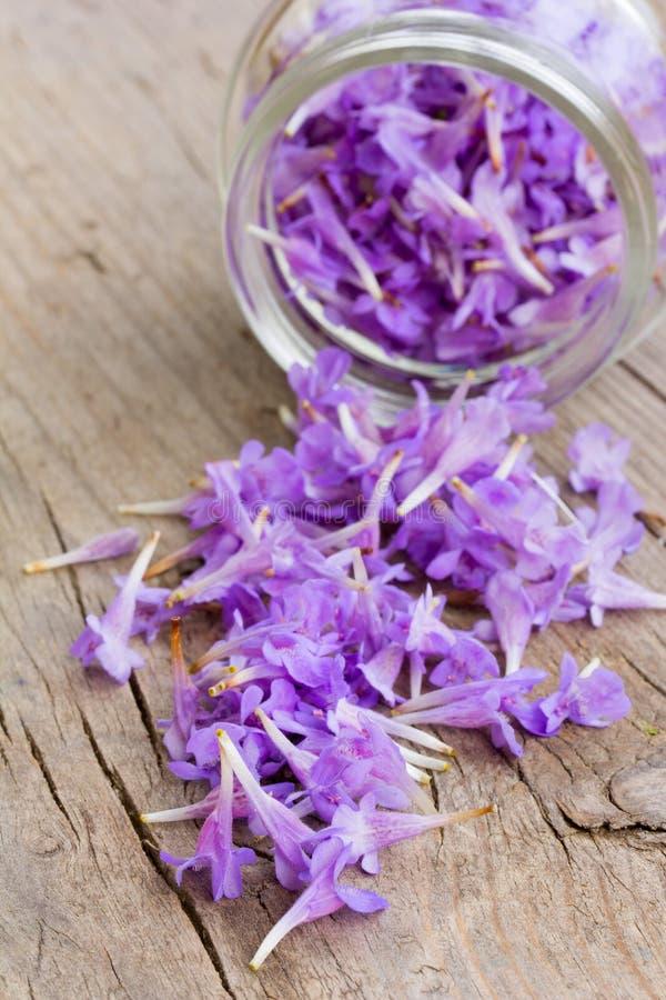Empalideça as pétalas roxas da flor chovidas para baixo dos frascos de vidro fotografia de stock royalty free