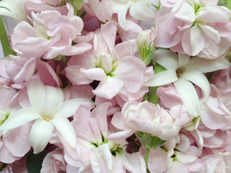 As flores Pastel da mola fecham-se acima fotos de stock