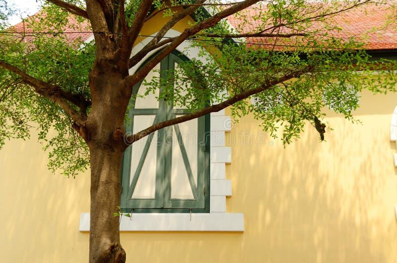 Empalideça - a parede amarela com janela e a árvore clássicas foto de stock