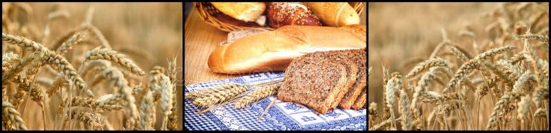 Empane y los rollos de granos y del campo de trigo enteros imagen de archivo