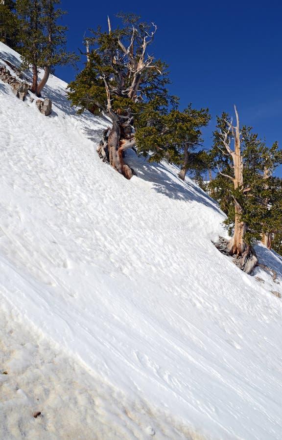Empape las cuestas angulosas en la montaña que muestra el terreno de la avalancha fotografía de archivo