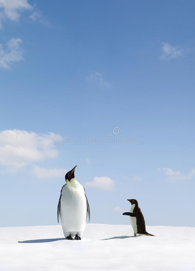 Emperor and Adelie Penguin. Emperor penguin looking up and ignoring Adelie penguin stock image