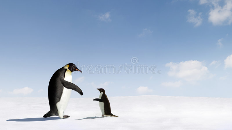Emperor and Adelie Penguins. Emperor penguin meeting an Adelie penguin in profile. On snow base with blue sky background