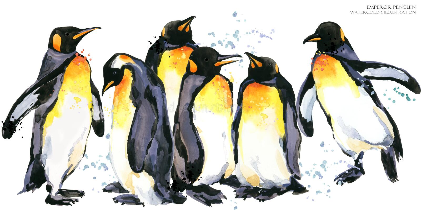 Emperor penguin set watercolor illustration. Emperor penguin watercolor illustration. wild polar animal royalty free illustration