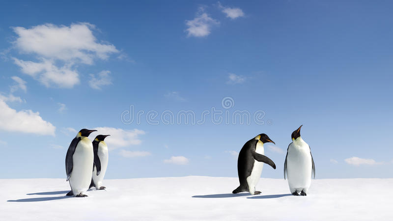 Emperor penguins. Emperor penguin begging for forgiveness royalty free stock photography