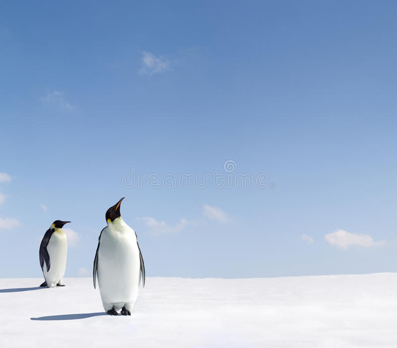 Download Emperor Penguins Royalty Free Stock Images - Image: 9578679