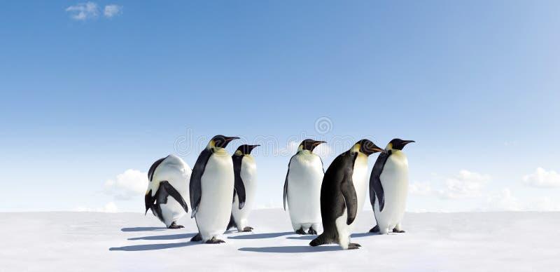 Download Emperor Penguins In Antarctica Stock Image - Image: 8509377