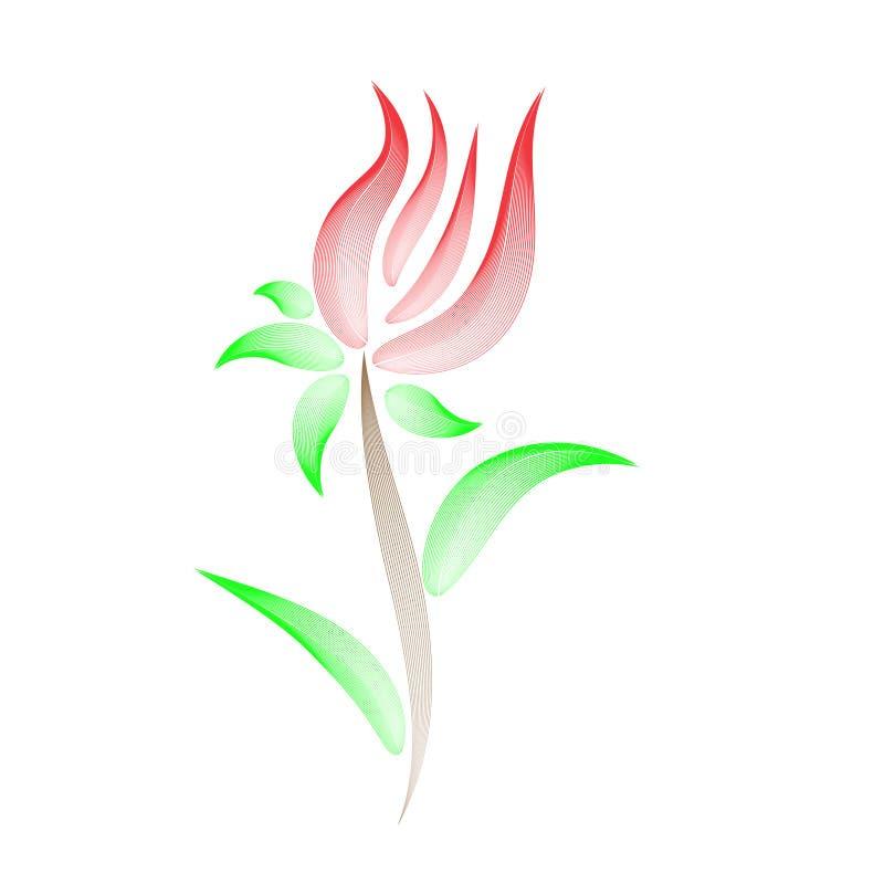 Empfindliche Blume mit einem Muster, Tulpe stock abbildung