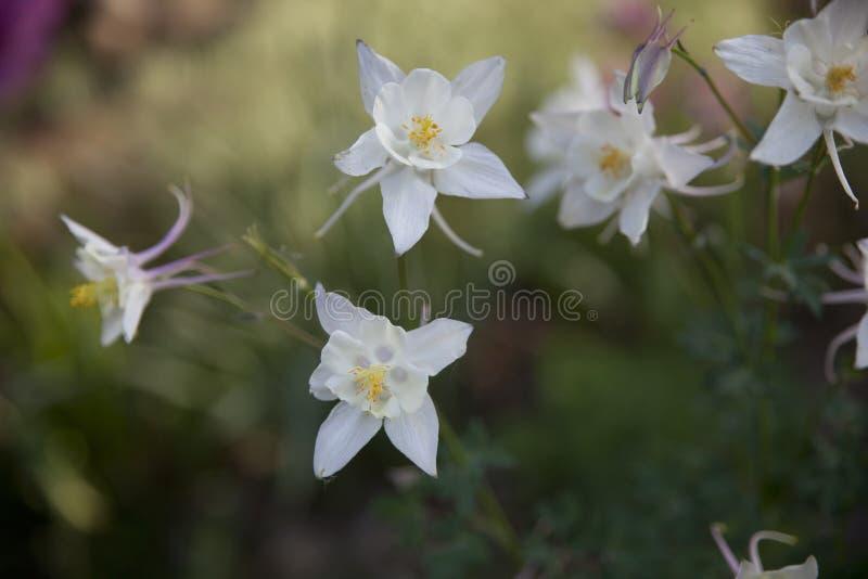 Empfindliche Blumen lizenzfreie stockbilder