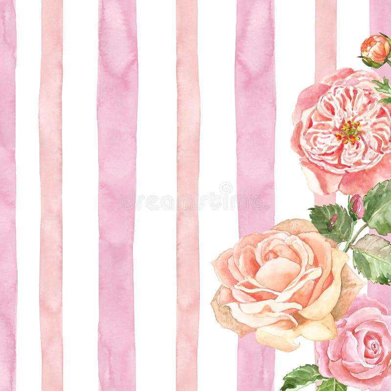 Empfindliche englische Rosen des Aquarells auf rosa gestreifter Beschaffenheit Weißer Hintergrund mit rosa Streifen und Gartenblu lizenzfreie abbildung