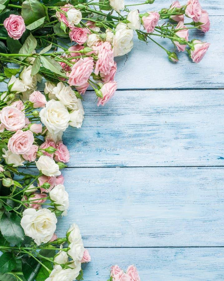 Empfindliche frische Rosen auf dem blauen Hintergrund lizenzfreie stockfotos