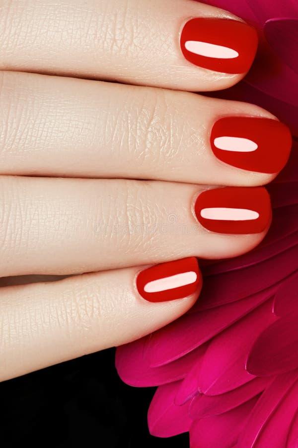 Empfindliche Hände der Schönheit mit der Maniküre, die rosa Blume hält, schließen u stockfotografie