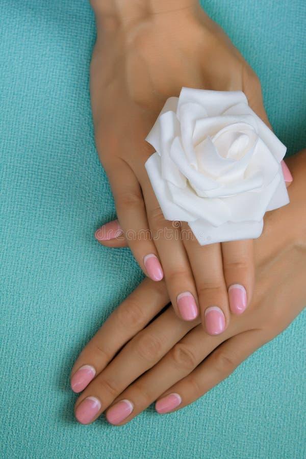 Empfindliche Hände der Schönheit mit der Maniküre, die Blume hält lizenzfreie stockfotos