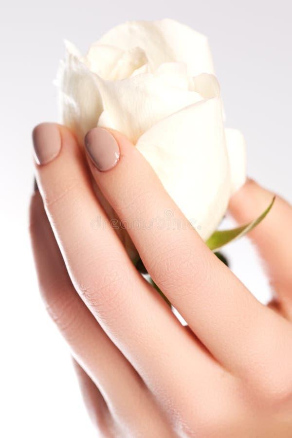 Empfindliche Hände der Schönheit mit der Maniküre, die Blumenrose lokalisiert hält stockfoto