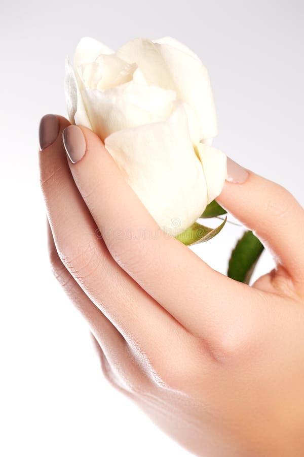 Empfindliche Hände der Schönheit mit der Maniküre, die Blumenrose lokalisiert hält stockfotos