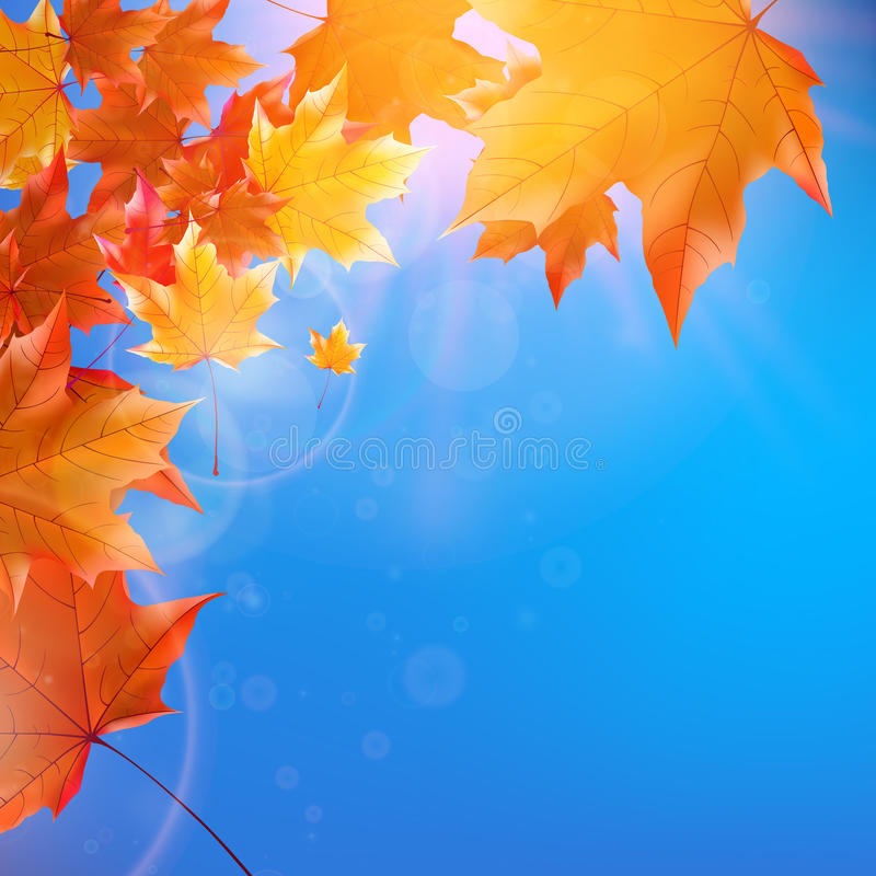 Empfindliche Herbstsonne mit grellem Glanz auf blauem Himmel vektor abbildung