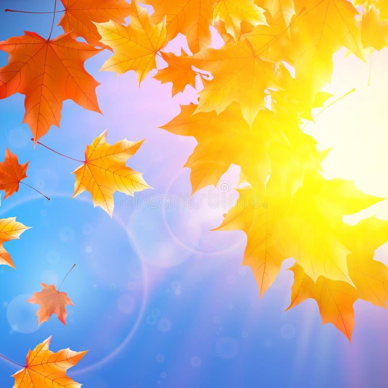 Empfindliche Herbstsonne mit grellem Glanz auf blauem Himmel stock abbildung