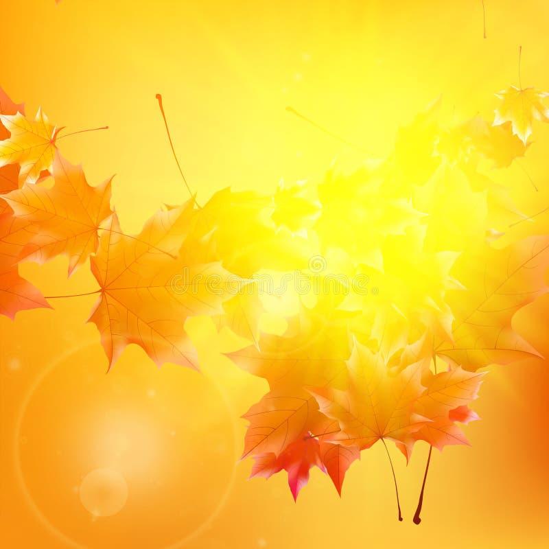 Empfindliche Herbstsonne mit grellem Glanz auf Goldhimmel lizenzfreie abbildung