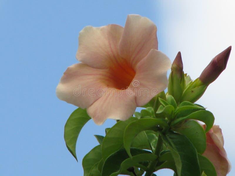 Empfindliche Schönheit in einer einfachen Blume stockfotografie