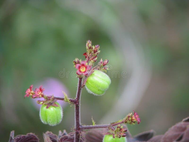 Empfindliche Schönheit in einer einfachen Blume, Miniaturschönheit stockfoto