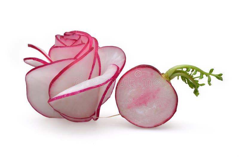 Empfindliche Zusammensetzung einer Rose und gekeimte Rettiche mit einem jungen grünen Stiel schneiden stockbilder