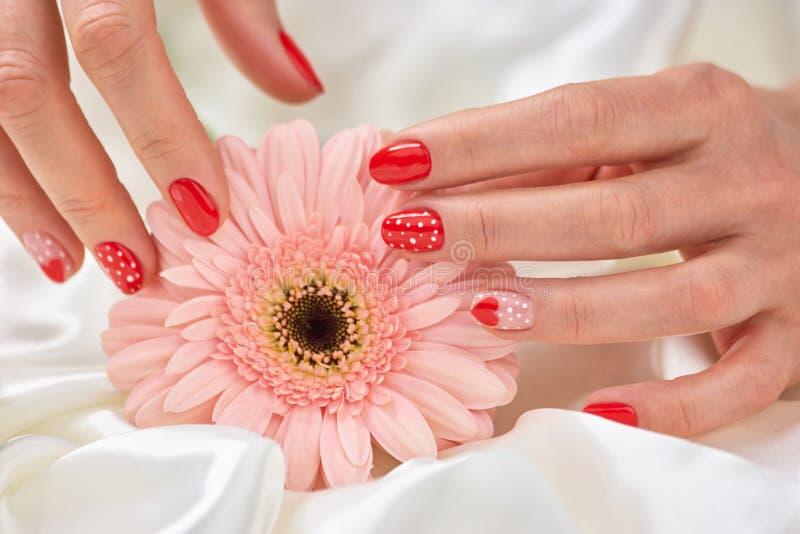 Empfindlicher rosa Gerbera und rote Maniküre lizenzfreie stockfotografie