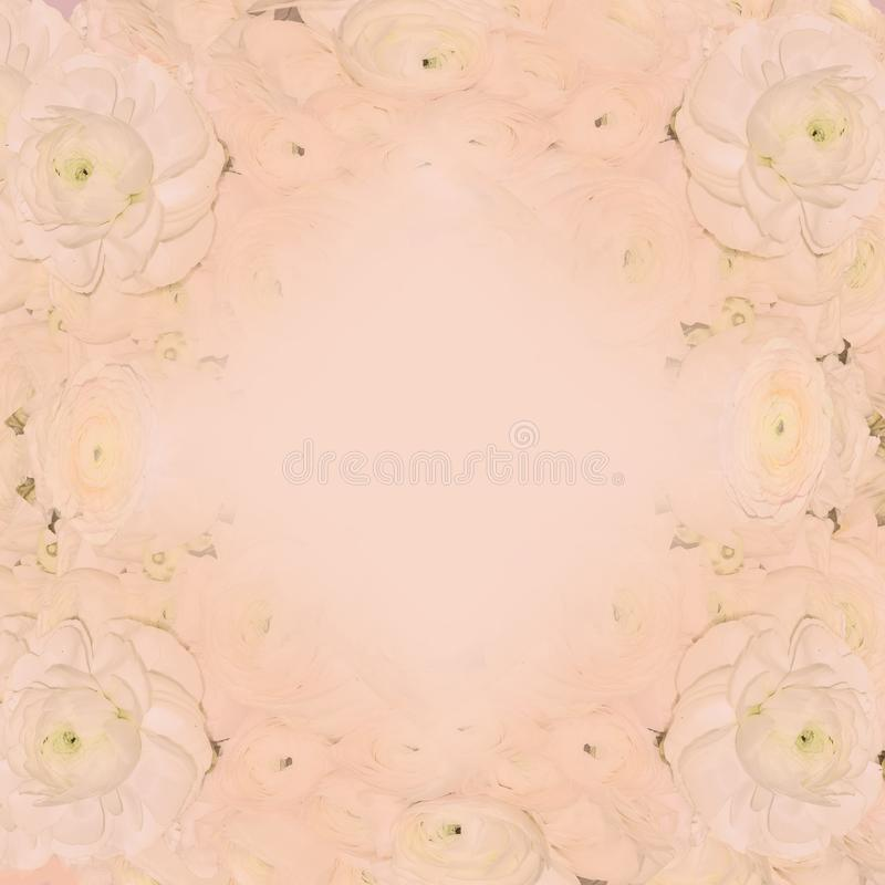 Empfindlicher sahnig-rosa festlicher Blumenpastellrahmen mit rosa ranun stockbilder