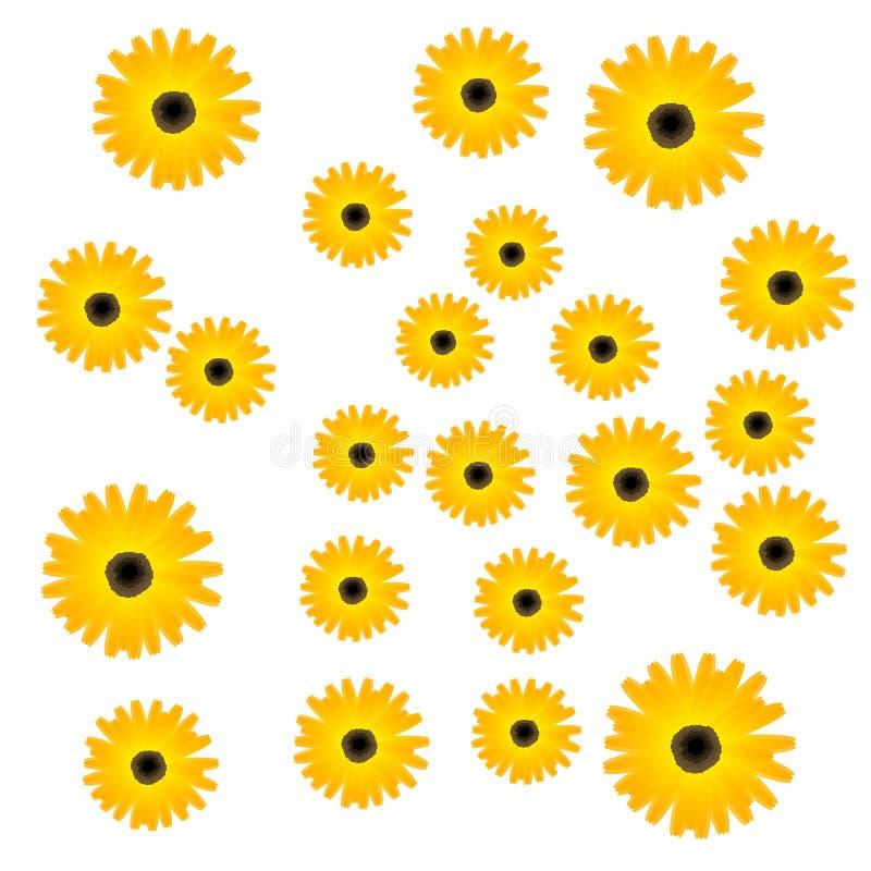 Empfindliches Blumen Ringelblumengelb stockfotos