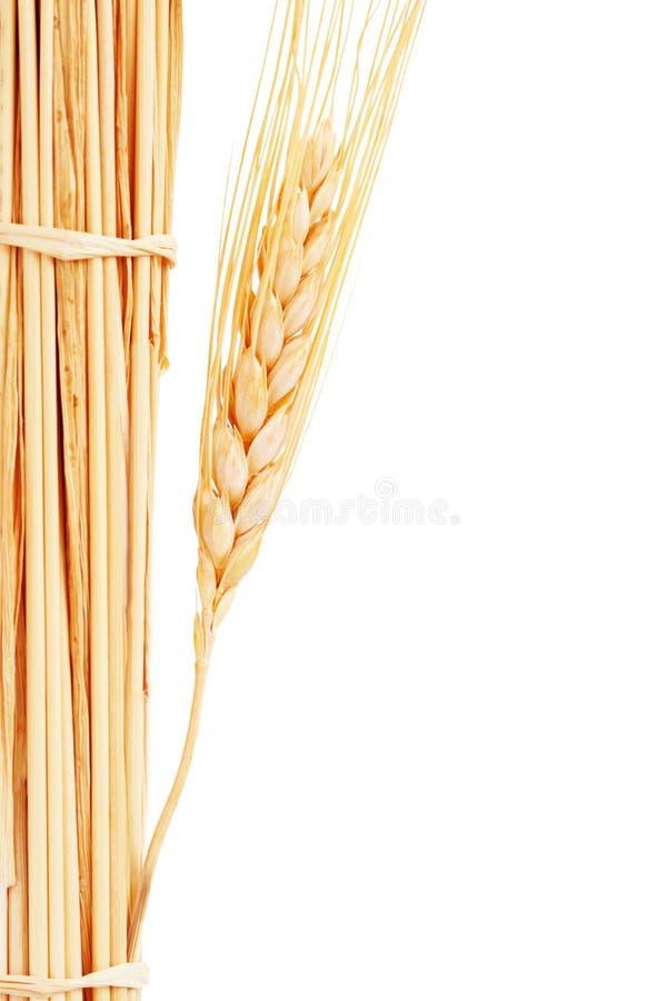 empilez le blé photographie stock