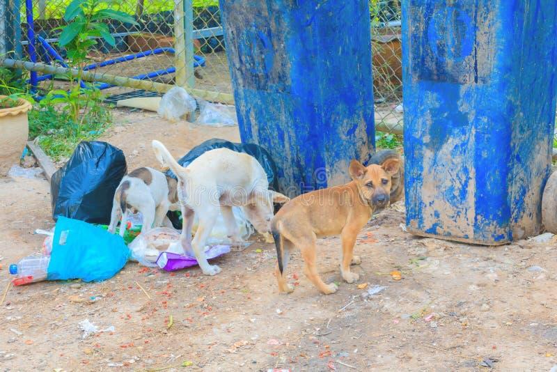 Empilhe o alimento plástico do achado do ancinho da borda da estrada e do cão três do saco preto do lixo na cidade foto de stock