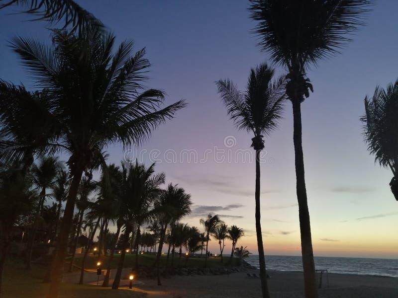 Empire Beach - Dusky Trees royalty free stock photography