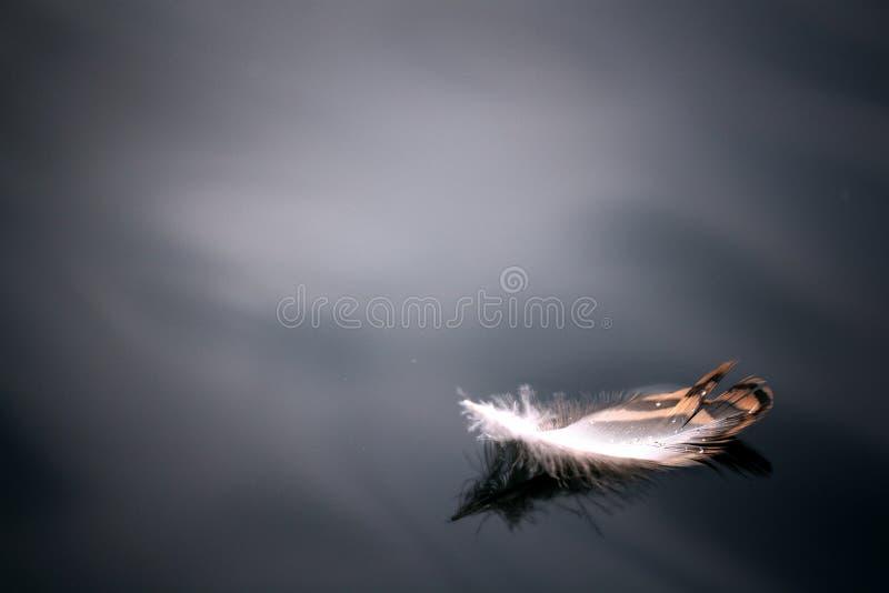 Emplume en el cierre hermoso del azul del negro del pájaro del fondo de los ángeles del agua fotos de archivo libres de regalías