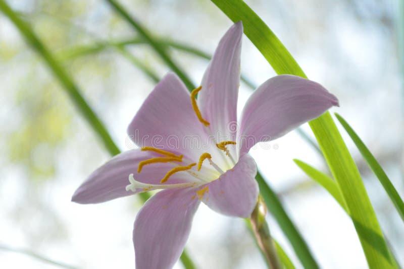 Emporkömmlings- Schussnahaufnahme der Blume lizenzfreie stockfotos